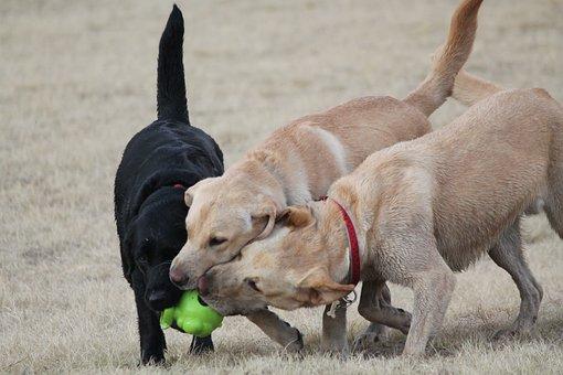 Pinellas Dog Parks