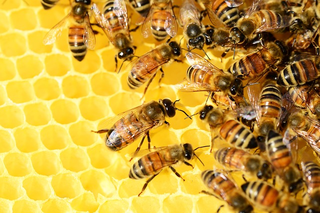 What Is The Buzzazz Hive?