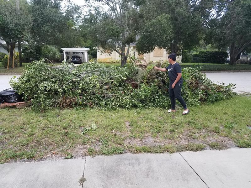 tree pile